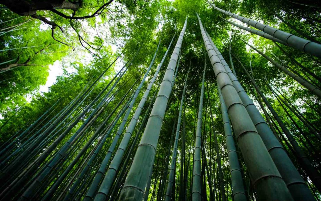 Grow like Bamboo